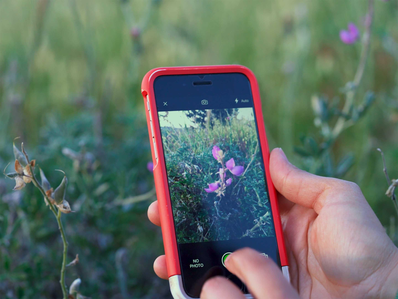 iNaturalist app in field