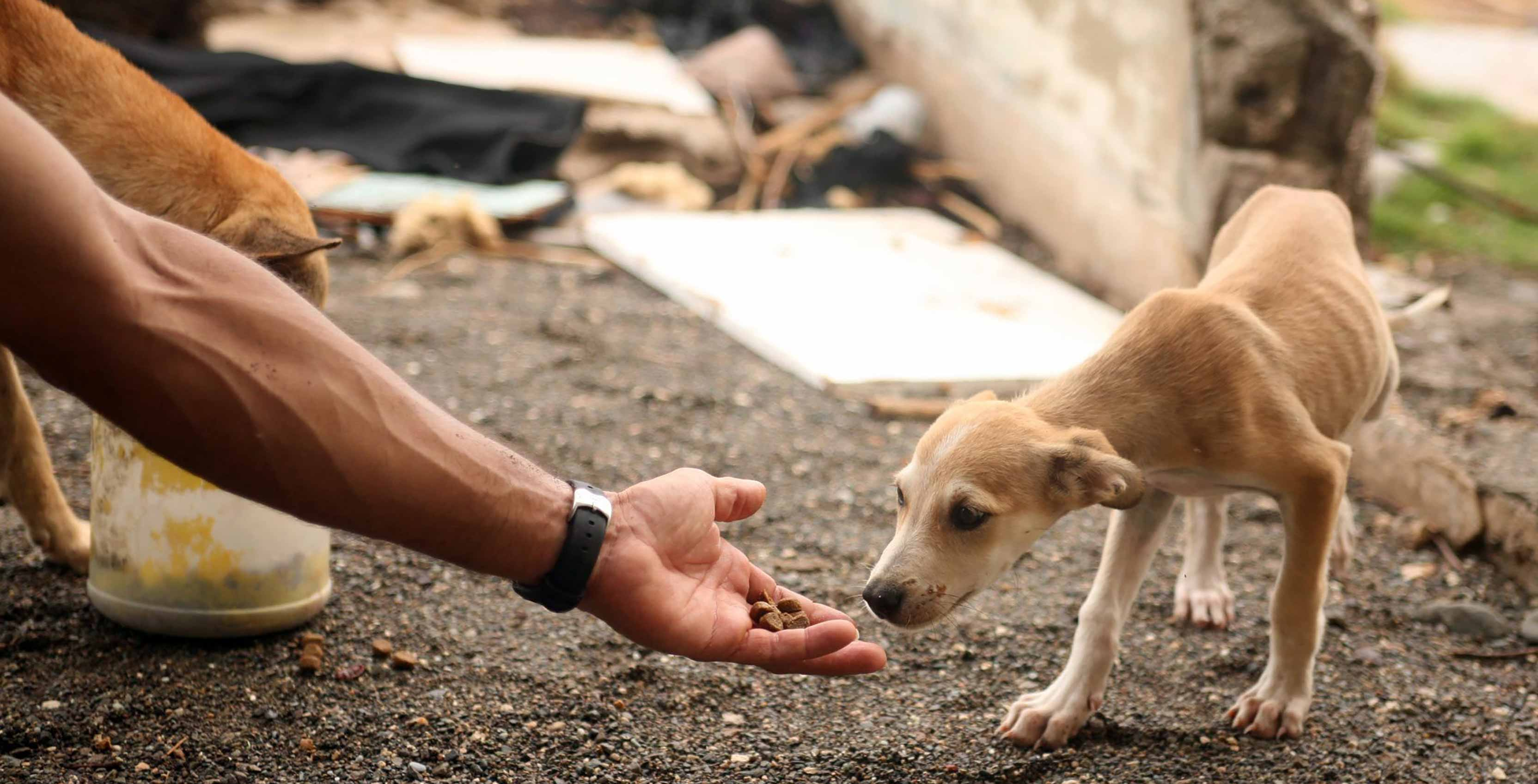 hand offering animal food