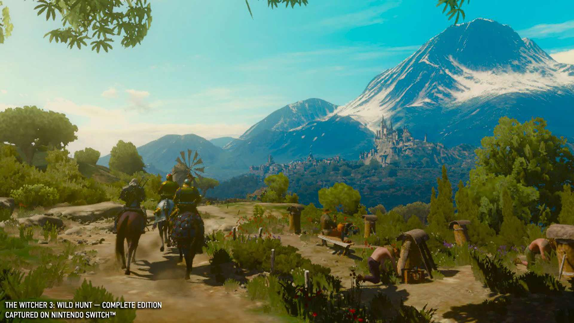 The Witcher 3 field