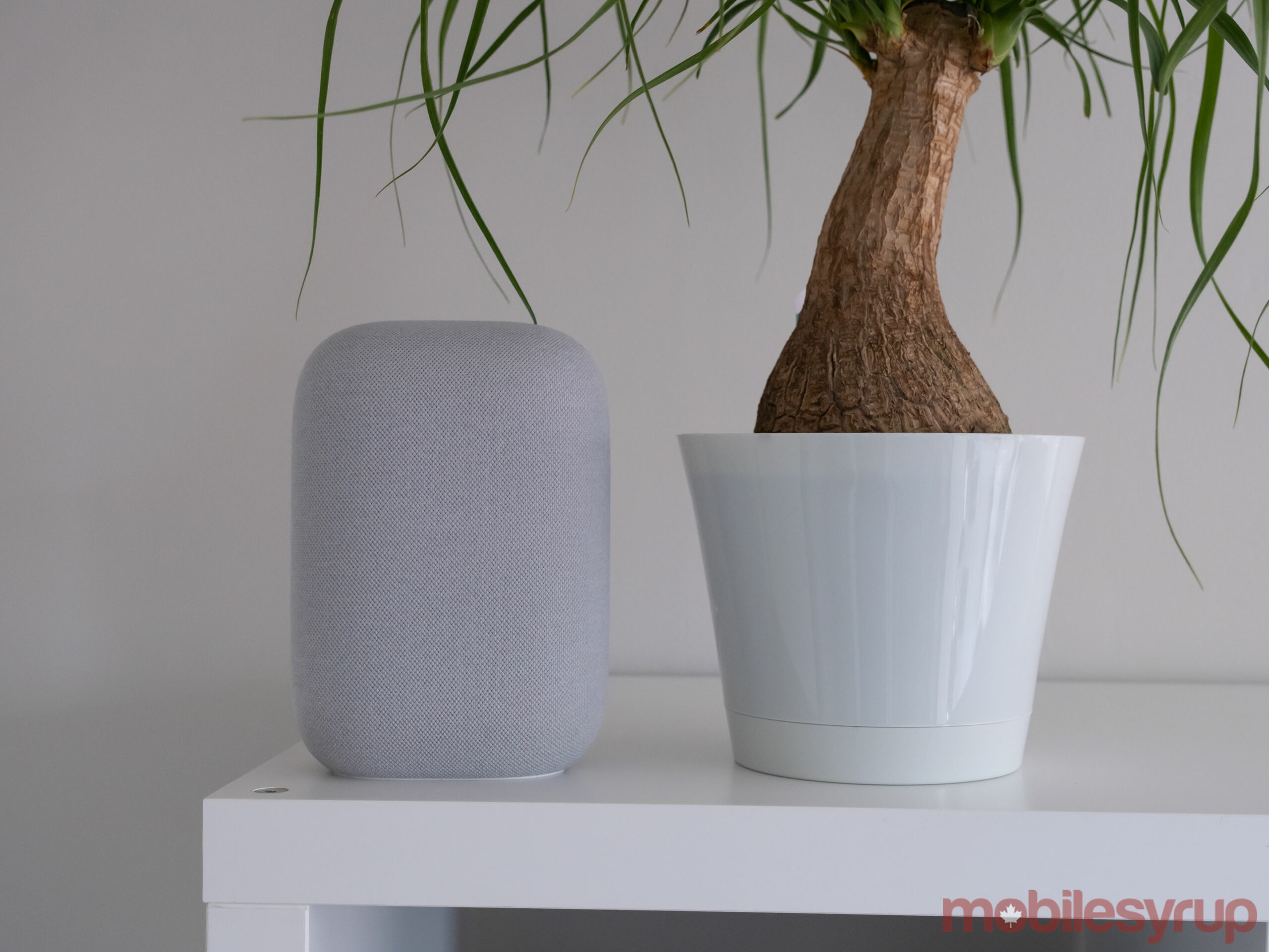 Nest Audio beside palm plant